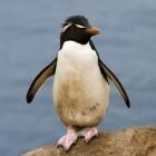 Kernel: Linux 4.3 erscheint ohne Ext3-Treiber