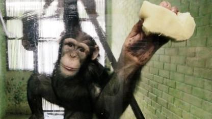 Achtung, hinter süßen Affenbildern kann sich Spionagesoftware verstecken.