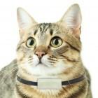 Weenect Cats: Telefonieren mit Miezi