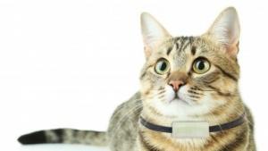 Der Katzen-Tracker von Weenect an einem entsprechenden Model