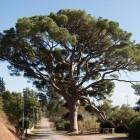 Energy Harvesting: Künstlicher Baum erzeugt Strom aus Schwingungen
