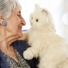 Companion Pets: Roboterkatze für Senioren von Spielzeughersteller Hasbro