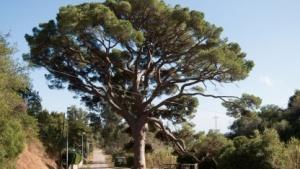 Baum (Symbolbild): Künstlicher Baum erzeugt elektrische Energie aus den zufälligen Kräften in der Natur.