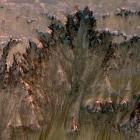 Raumfahrt: Marsrinnen werden wohl nicht von Wasser verursacht