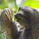 MD5/SHA1: Sloth-Angriffe nutzen alte Hash-Algorithmen aus