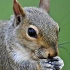 Internet- und Stromausfälle: Angriff der Cyber-Eichhörnchen
