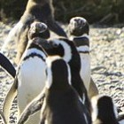 Linux: Vermeidbare Lücke bedroht Mehrzahl der Android-Geräte