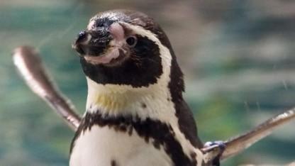 Linux 4.5-rc1 bringt rund 9.500 Änderungen.