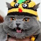 Facebook: Live vom Katzengeburtstag