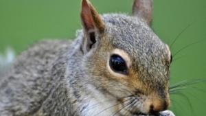 Will dieses Eichhörnchen uns das Internet wegnehmen?