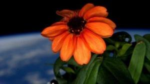 Blume vor Weltraum: in schlechtem Zustand übernommen