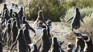 Mit mehr Sicherheitsfunktionen im Linux-Kernel hätte der Fehler nicht ausgenutzt werden können.