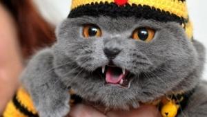 Bild einer Katzenausstellung