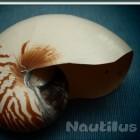 Gnome: Dateimanager Nautilus wird runderneuert