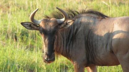 Das GNU-Projekt verfügt jetzt auch über ein neuronales Netz.