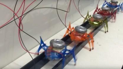 Ein Team von Schwarmrobotern in Ameisenform