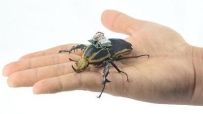 Käfer mit Funkchip: Geschwindigkeit, Richtung und Gangart vorgeben