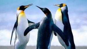 Linux 4.5 verbessert nicht nur die Grafiktreiber, sondern schützt auch vor defekter Firmware.