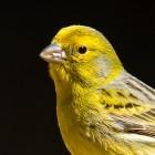 Datenweitergabe an Regierung: Reddits Kanarienvogel hat ausgezwitschert