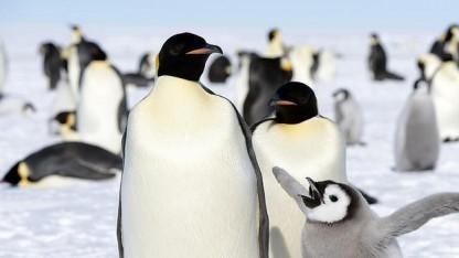 Oracle will einen eigenen Zweig des Linux-Kernels anbieten, der nur Sicherheitspatches enthält.