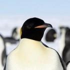 Kernel: Oracle startet eigene Sammlung von Linux-Sicherheitspatches