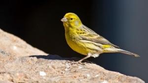 Der Kanarienvogel von Reddit singt nicht mehr.