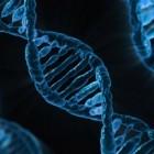 Speichertechnik: US-Forscher stellen Rekord mit DNA-Speicher auf
