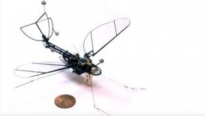 Roboschmetterling: Start vom Katapult