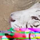 Daala-Entwickler: Freie Videocodecs teilweise besser als H.265