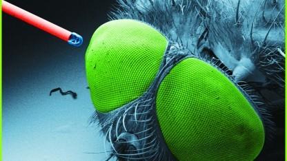 3D-gedrucktes Objektiv auf einer optischen Faser neben einer Fliege.