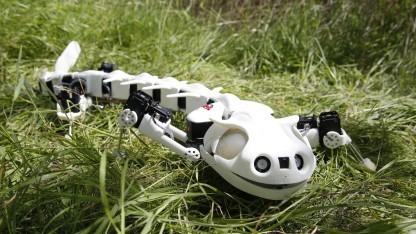 Pleurobot: Übergang vom Schwimmen zum Gehen