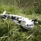 Pleurobot: Bewegungen verstehen mit einem Robo-Salamander