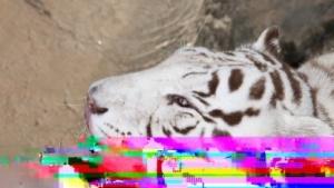 Ein Testbild für Daala mit absichtlich erzeugten Artefakten