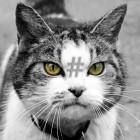 Passwort-Cracker: Hashcat will jetzt auch Veracrypt knacken können