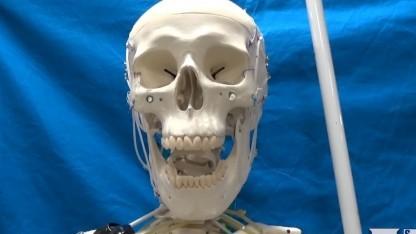 Roboter mit künstlichen Muskeln: Gang mit Open Simulator programmiert