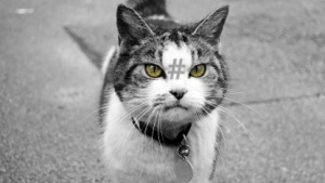 Hashcat ist in einer neuen Version erschienen.