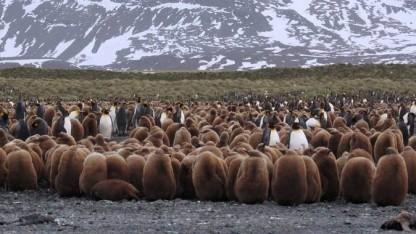 Die Fülle der Linux-Distributionen ist mittlerweile schier unüberschaubar.
