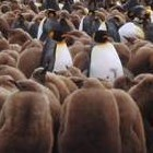 25 Jahre Linux: Besichtigungstour zu den skurrilsten Linux-Distributionen