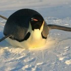 """Linux: Kernel-Sicherheitsinitiative wächst """"langsam aber stetig"""""""