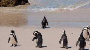 Die Linux-Werkzeugsammlung Systemd ist erweitert worden.