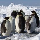 Kernel: Linux 4.9 erscheint mit Protokoll für Project-Ara-Module