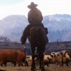 Red Dead Redemption 2: Das Wildwest-GTA im ersten Trailer