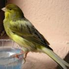 Geheime Überwachung: Der Kanarienvogel von Riseup singt nicht mehr