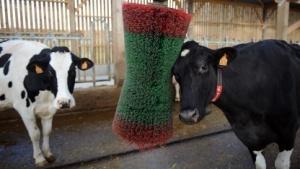 Diese Kühe sind sauber. In Android wurde Dirty Cow aber noch nicht geschlossen.