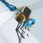 DragonflEye: Die Libelle wird zur Drohne