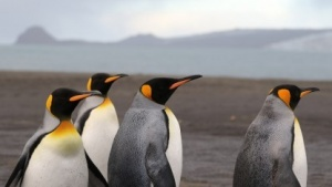Einige Linux-Distributionen haben Probleme mit ihrem NTFS-Treiber.