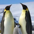 Betriebssysteme: Linux 4.11rc1 erhöht die Datensicherheit