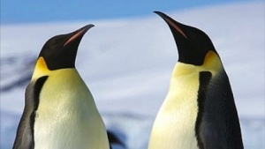 Die Testphase für Linux 4.11 beginnt.