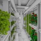 DLR-Projekt Eden ISS: Das Paradies ist ein Container