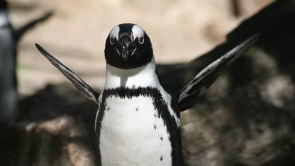 Linux 4.12 tritt in die Entwicklungsphase.